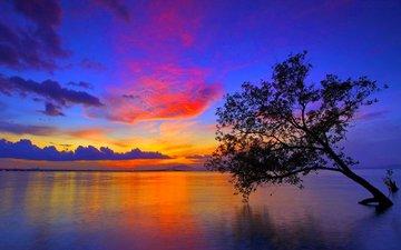 небо, вечер, озеро, дерево, зарево, обьлака