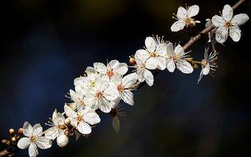 природа, цветение, веточка, цветочки