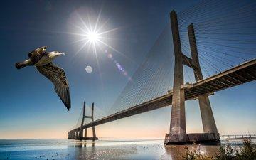 мост, чайка, птица, португалия, лиссабон