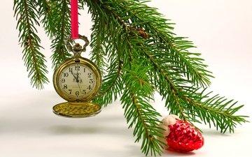 watch, toy, spruce, spruce branch