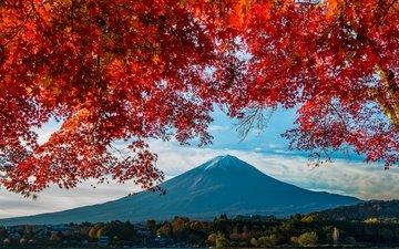 гора, осень, япония, клен, фудзияма