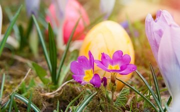 flowers, grass, nature, spring, easter, eggs, holiday