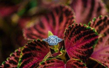 лепестки, камень, кольцо, обручальное