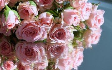 отражение, розы, розовые