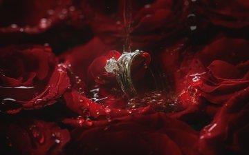 вода, роза, лепестки, кольцо