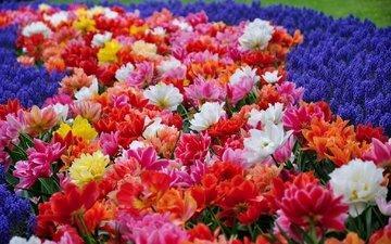 цветы, парк, тюльпаны, гиацинты