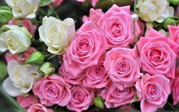 бутоны, розы, букет