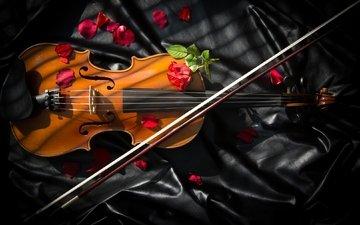 roses, violin, bow