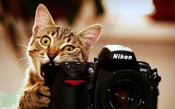 кот, аппарат, валлпапер, nicon
