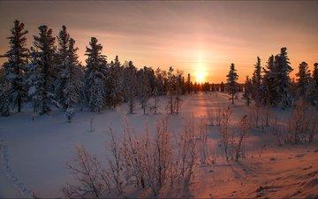 закат, деревь, валлпапер