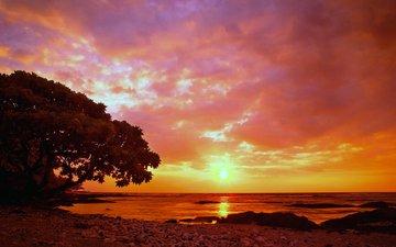 небо, облака, закат, побережье, деревь, валлпапер