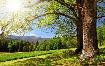 деревья, горы, солнце, вс, деревь, ландшафт, валлпапер
