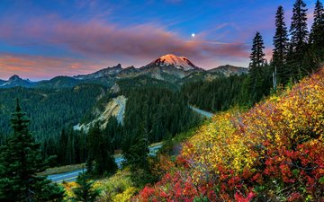 горы, луг, полевые цветы, деревь, валлпапер