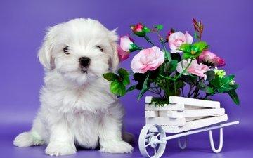цветы, щенок, милый