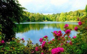 цветы, деревья, озеро, лес, деревь, лейка, цветы, валлпапер