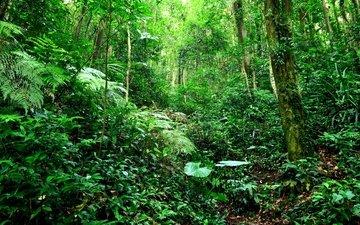 трава, деревья, зелень, лес, листья, ветки, кусты, тропики, джунгли