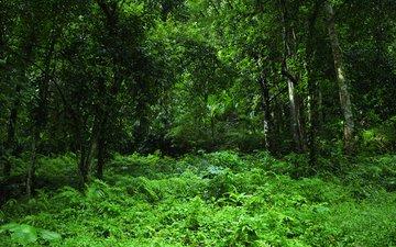 трава, деревья, зелень, лес, тропики, джунгли