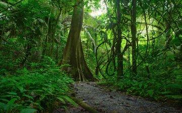 деревья, зелень, лес, ветки, кусты, тропики, джунгли, лианы