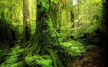 деревья, зелень, лес, кусты, мох, тропики, джунгли