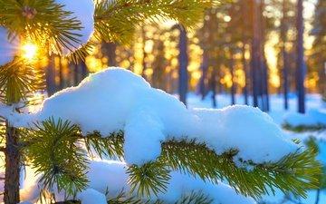 ветка, солнце, снег, хвоя, зима, ветви, ель, вс