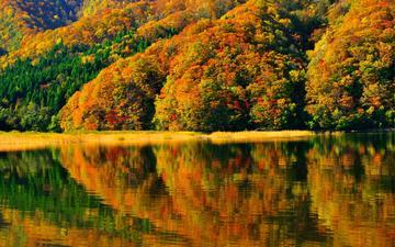 деревья, берег, отражение, япония, японии, осен, фукусима, озеро акимото