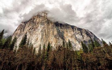 небо, облака, деревья, тучи, скала, гора, сша, калифорния, неба, деревь, йосемити, национальный парк, наскальные, йосемитский национальный парк, калифорнийская