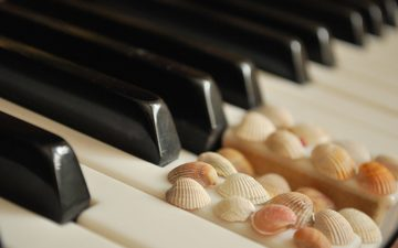 shell, white, piano, keys, black