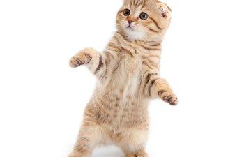 cat, kitty, fluffy, kittens