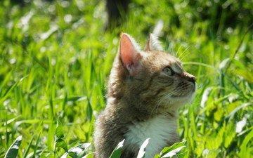 трава, зелень, кот, кошка, весна, весенние
