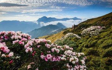 цветы, облака, горы, азалия, рододендрон