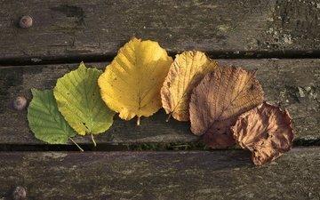 листья, осень, осен, листья