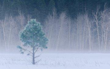 деревья, снег, лес, зима, туман, поляна, луг, сша, калифорния, деревь, йосемити, национальный парк, йосемитский национальный парк, калифорнийская