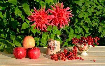 красный, яблоко, натюрморт, калина, георгины