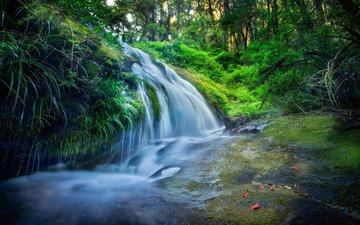 трава, вода, лес, водопад, поток, мох