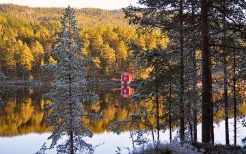 деревья, река, берег, лес, хвоя, отражение, осень, домик, норвегия, осен, норвегии