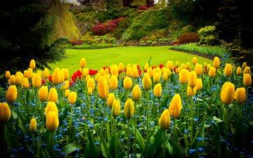 парк, тюльпаны, канада, газон, queen elizabeth park