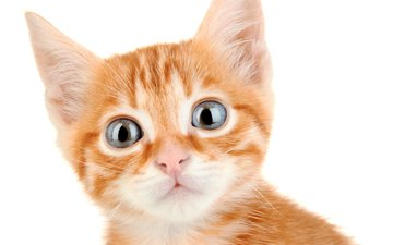 eyes, kitty, cats, kittens, red