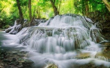 деревья, вода, лес, водопад, поток