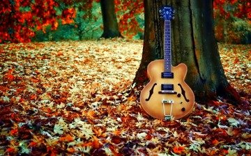 tree, leaves, guitar, autumn, falling leaves