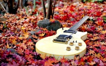 forest, leaves, guitar, autumn