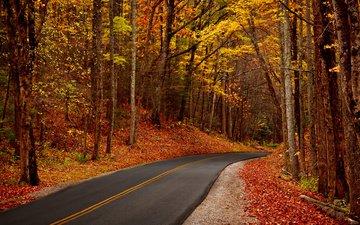 дорога, деревья, природа, лес, листья, парк, осень, тропинка, прогулка, hdr, деревь, на природе, осен, автодорога, листья