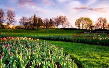 парк, весна, тюльпаны, канада, неба, тульпаны