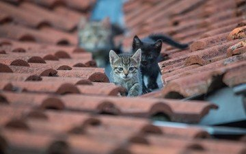 eyes, look, cats, roof, kittens