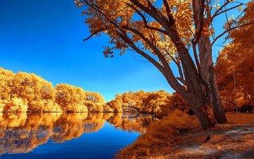 деревья, озеро, отражение, листва, осень, безмятежность, неба, деревь, опадают, лейка, осен, calmness, tranquil