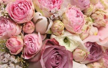 цветы, розы, роза, красавица, романтика, букет, романтик, красивые, мелодрама, красива, цветы, хорошенькая, классная, роз, цветком, ницца, lovely, for you, я люблю тебя