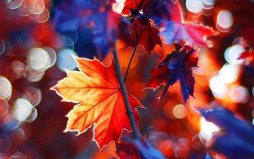 дерево, листья, ветки, осень, клен