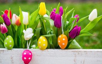 spring, tulips, easter, eggs