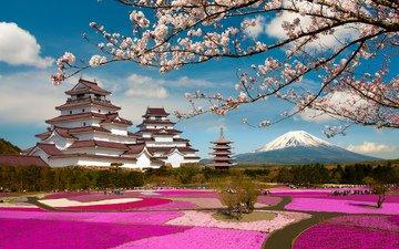 цветение, парк, ветки, замок, япония, сакура, вулкан, японии, фудзияма, фукусима, гора фудзи, aizuwakamatsu castle, tsuruga castle, aizuwakamatsu, замок аидзувакамацу, аидзувакамацу
