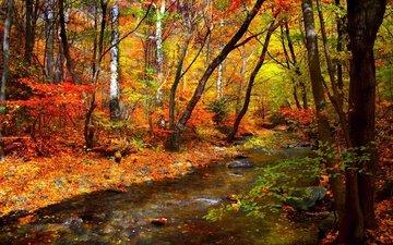 деревья, вода, лес, листья, ручей, осень, листопад, деревь, опадают, на природе, осен, листья