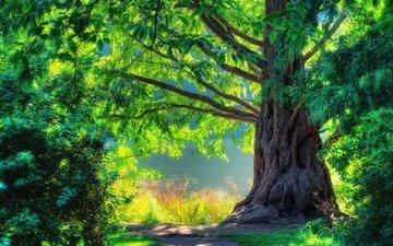 природа, дерево, лес, зелёный, пейзаж, весна, прогулка, hdr, scenery, ландшафт, на природе, красива, классная, весенние, ницца, грин, дерево